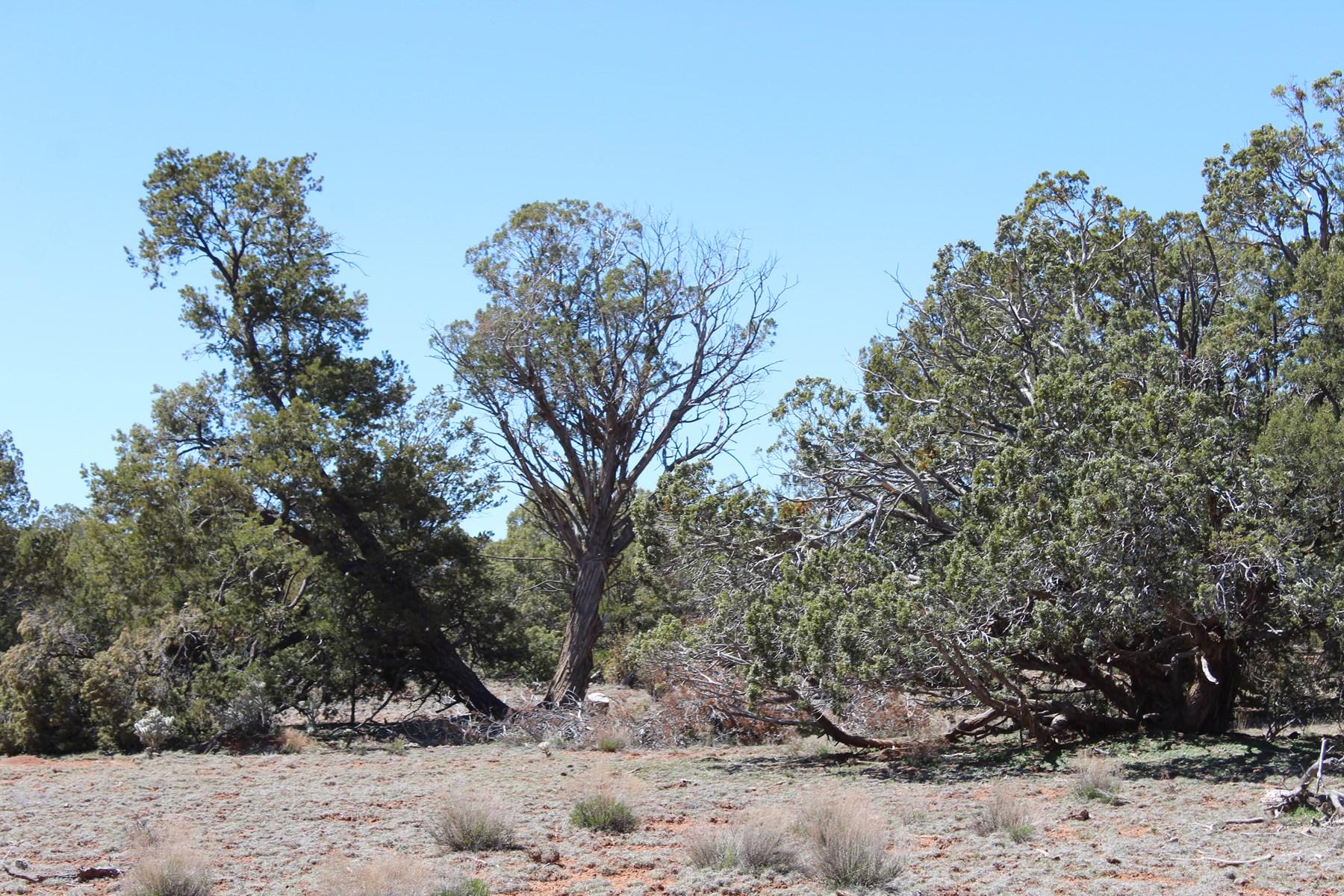 Affordable Mountain Land for Sale Seligman AZ