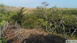 25 HECTARE FARM LAND FOR SALE IN EL CRISTO AGUADULCE COCLE
