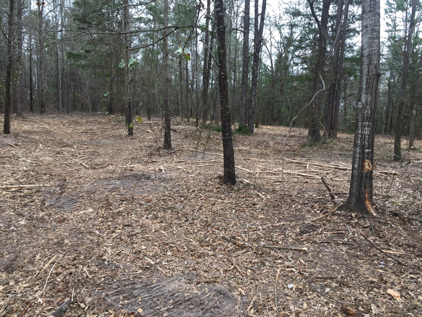 East Texas Hunting Land/ home site for sale