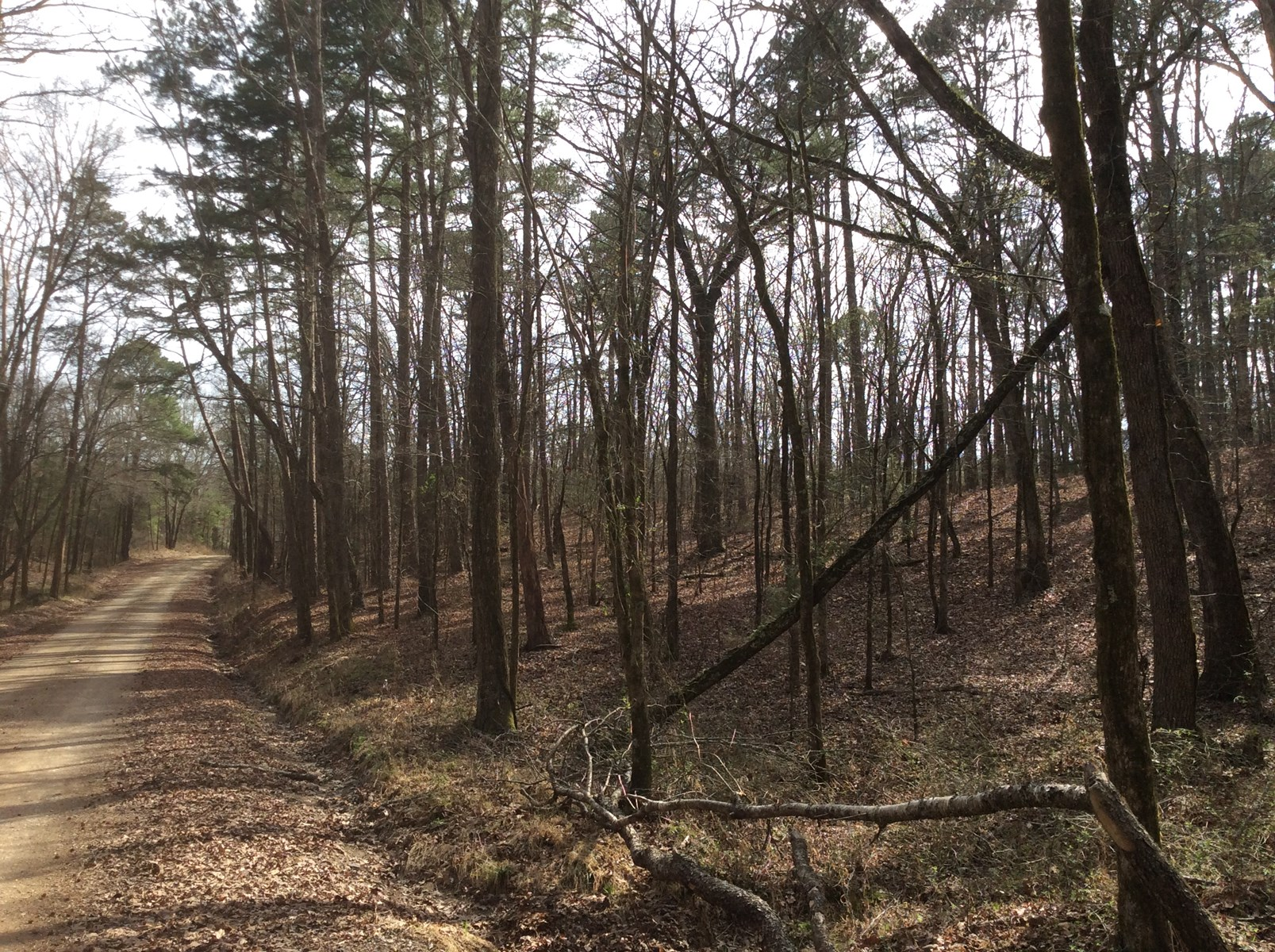 40 Acres of Commerical Pine and Hardwood