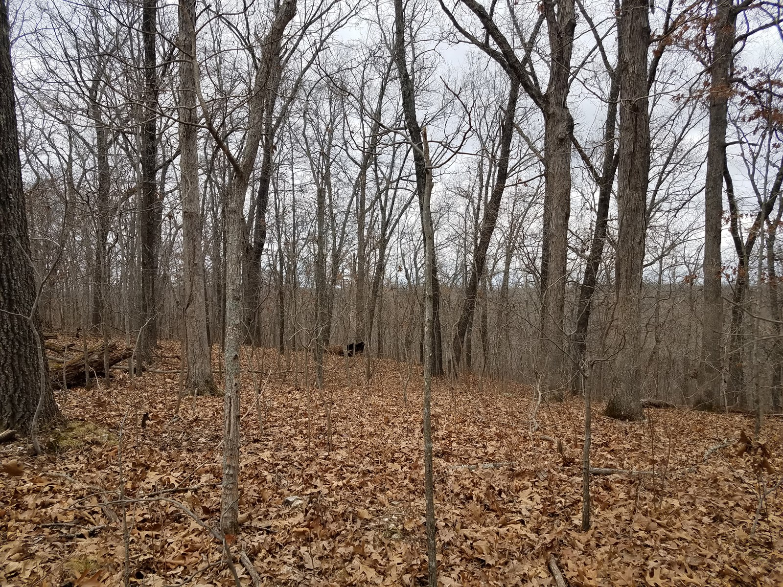 Land Near Lake of the Ozarks! 32+/- Acres Vacant Land!