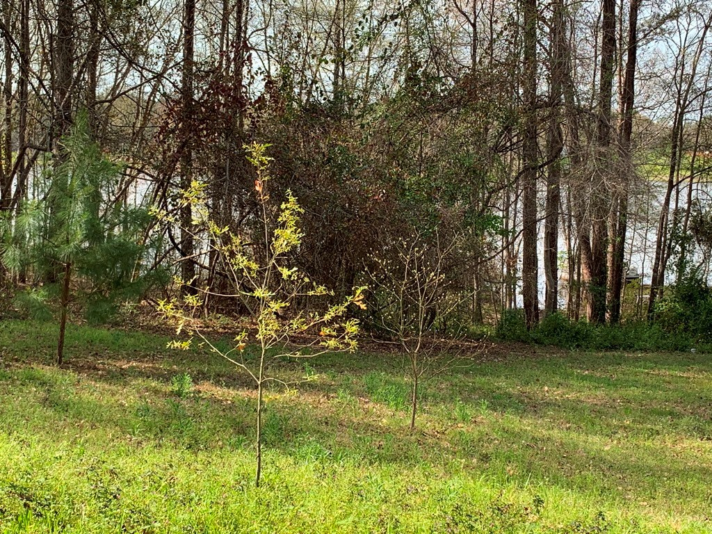 WATERFRONT LOT ON HIGHSAW BAY LAKE PALESTINE