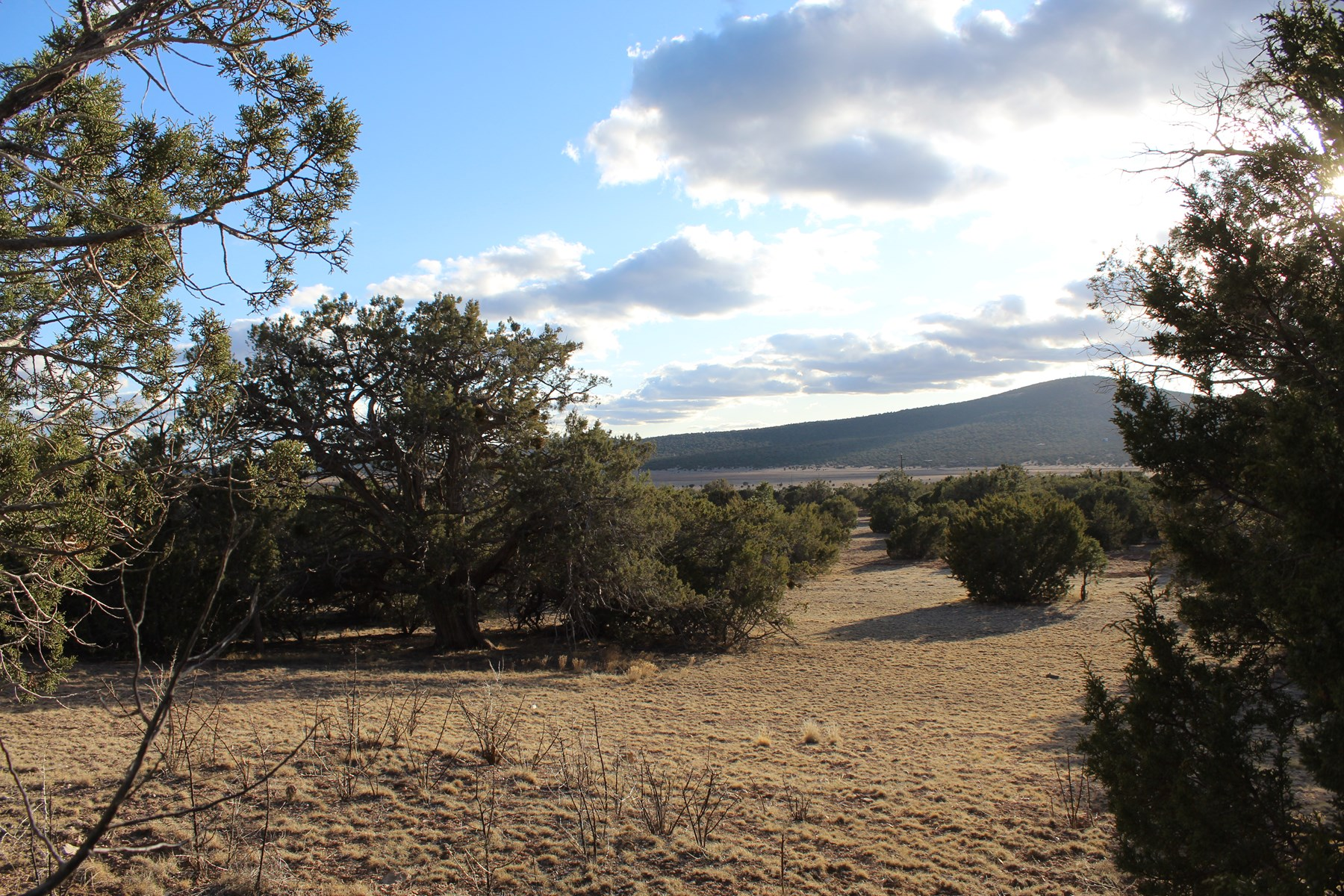 Large acreage land in Seligman NO HOA
