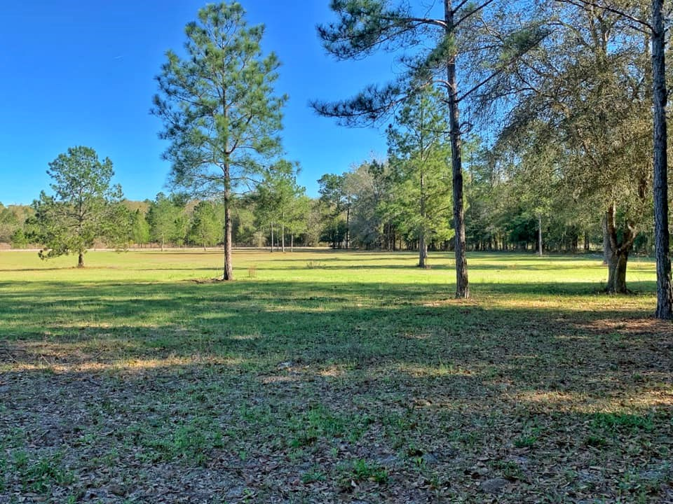 VACANT LAND FOR SALE 20 ACRES BELL FLORIDA