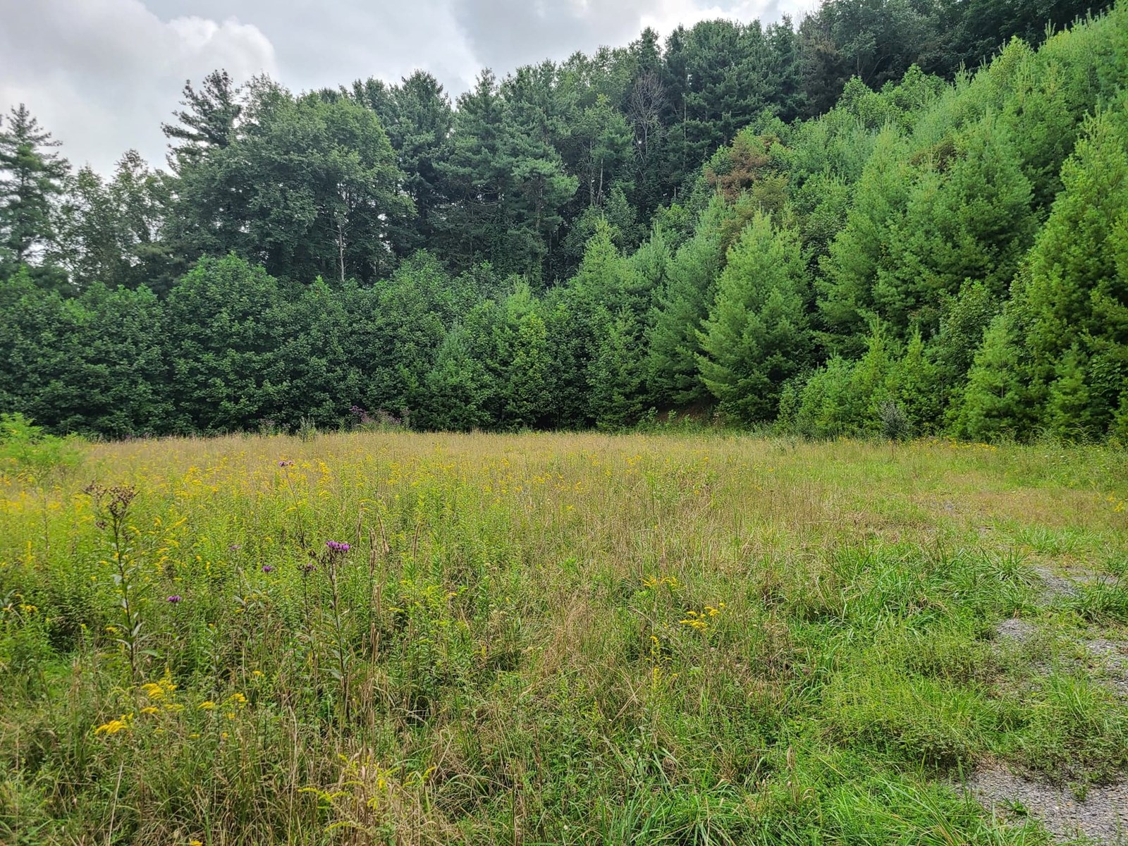 3.6 Acres Close to Town for Sale Tazewell VA