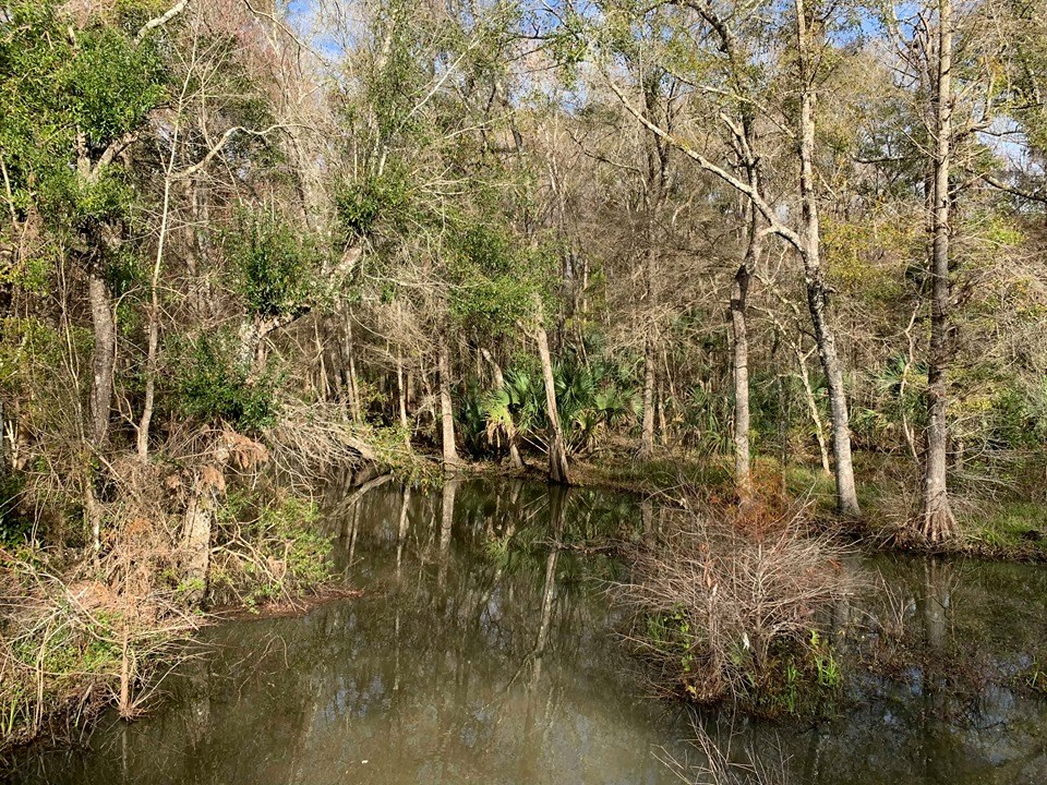WOODED PROPERTY FOR SALE - LEVY COUNTY, CHIEFLAND FLORIDA