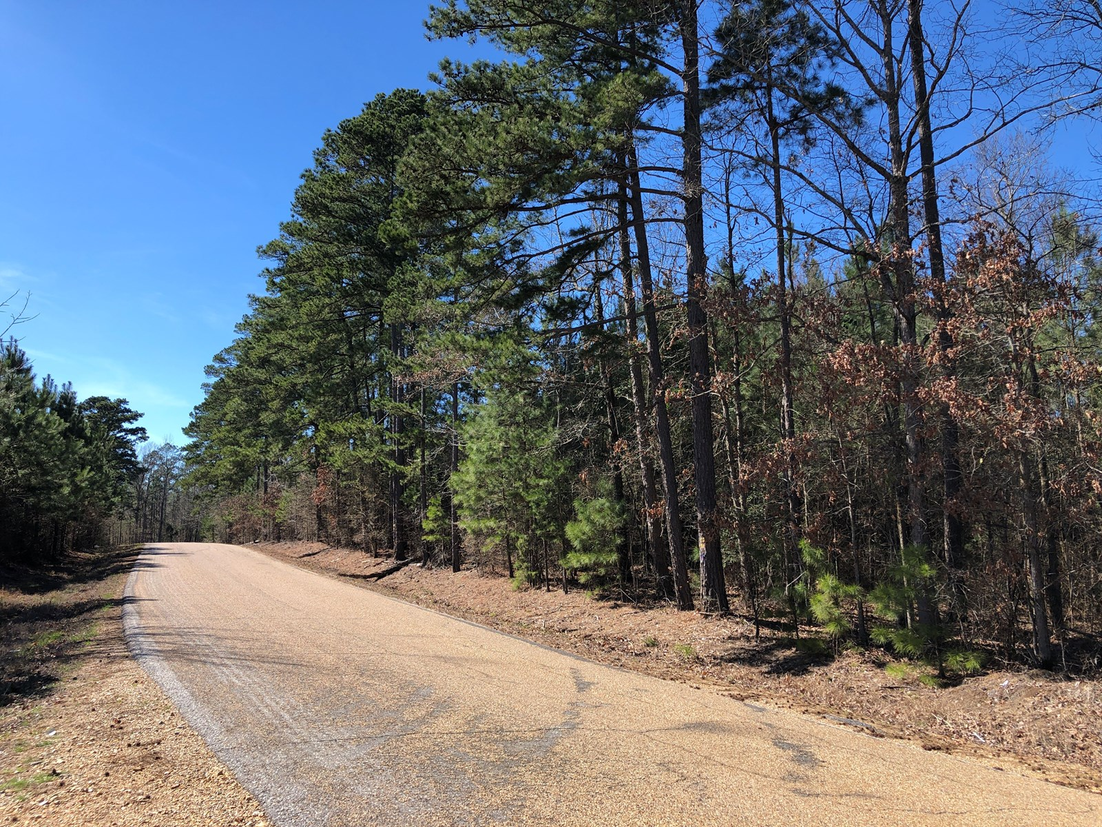 Pine Timberland W/ Home Site Potential in Clark Co. for Sale