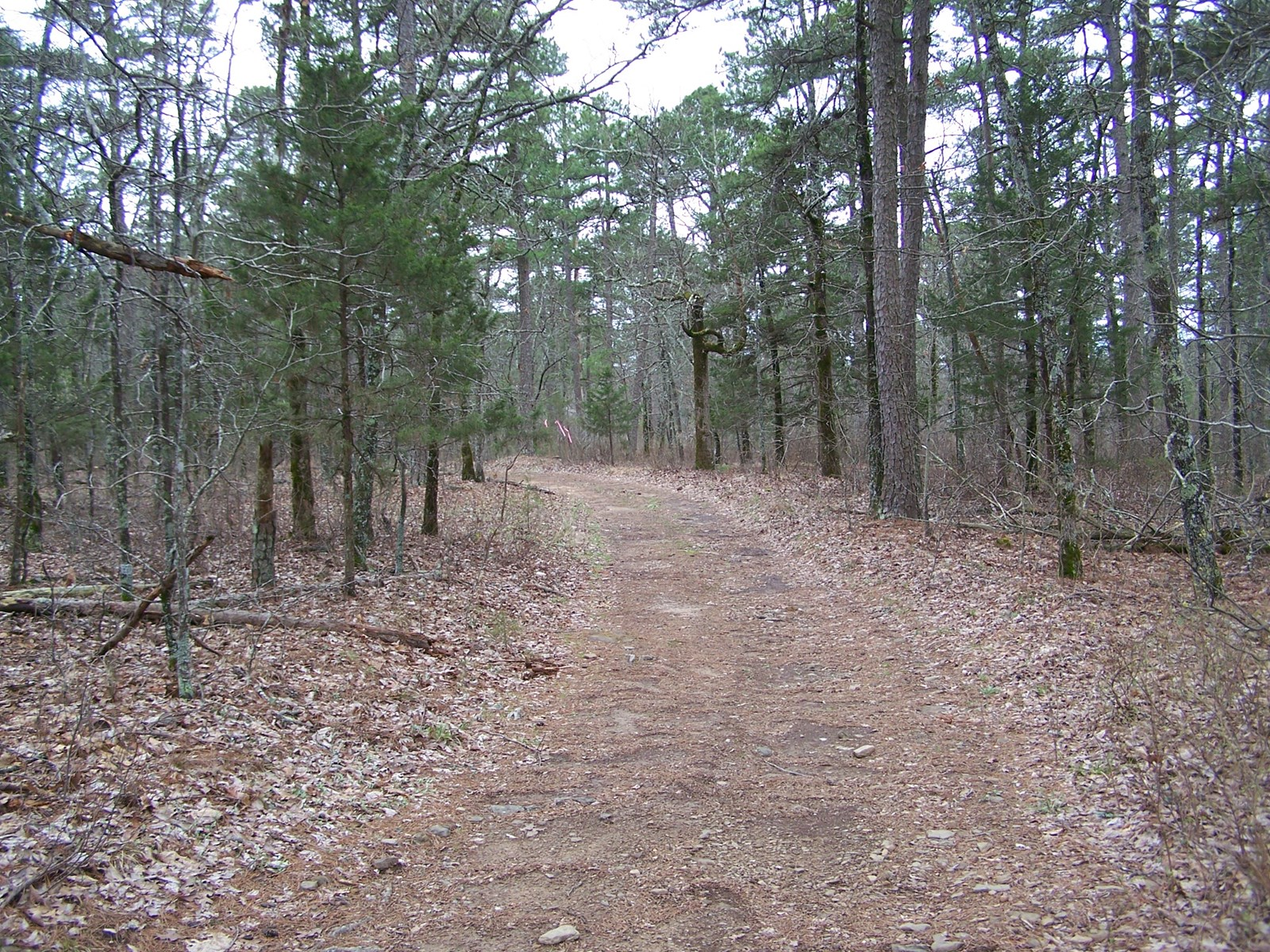 4 Acres Ozark Mountain Land For Sale