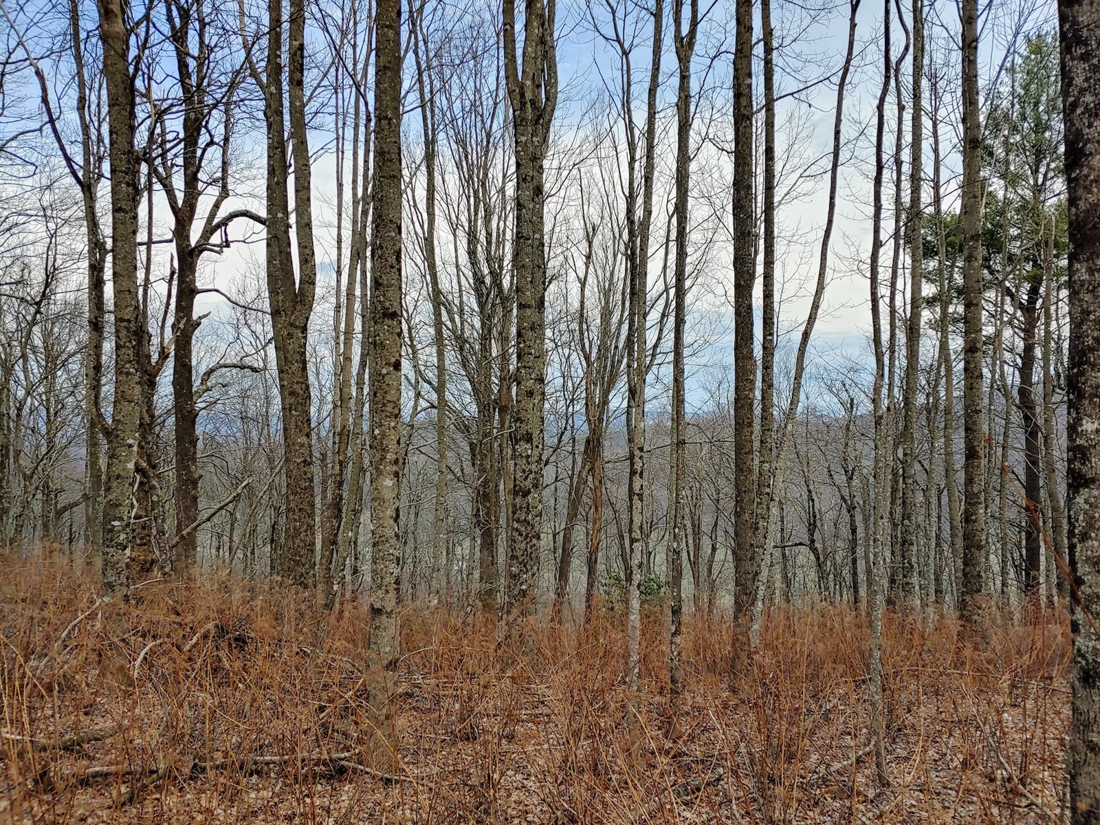 Beautiful Mountain Property for Sale in Meadows of Dan VA