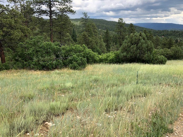 Chama NM Mountain Land for Sale with Acreage Near Power