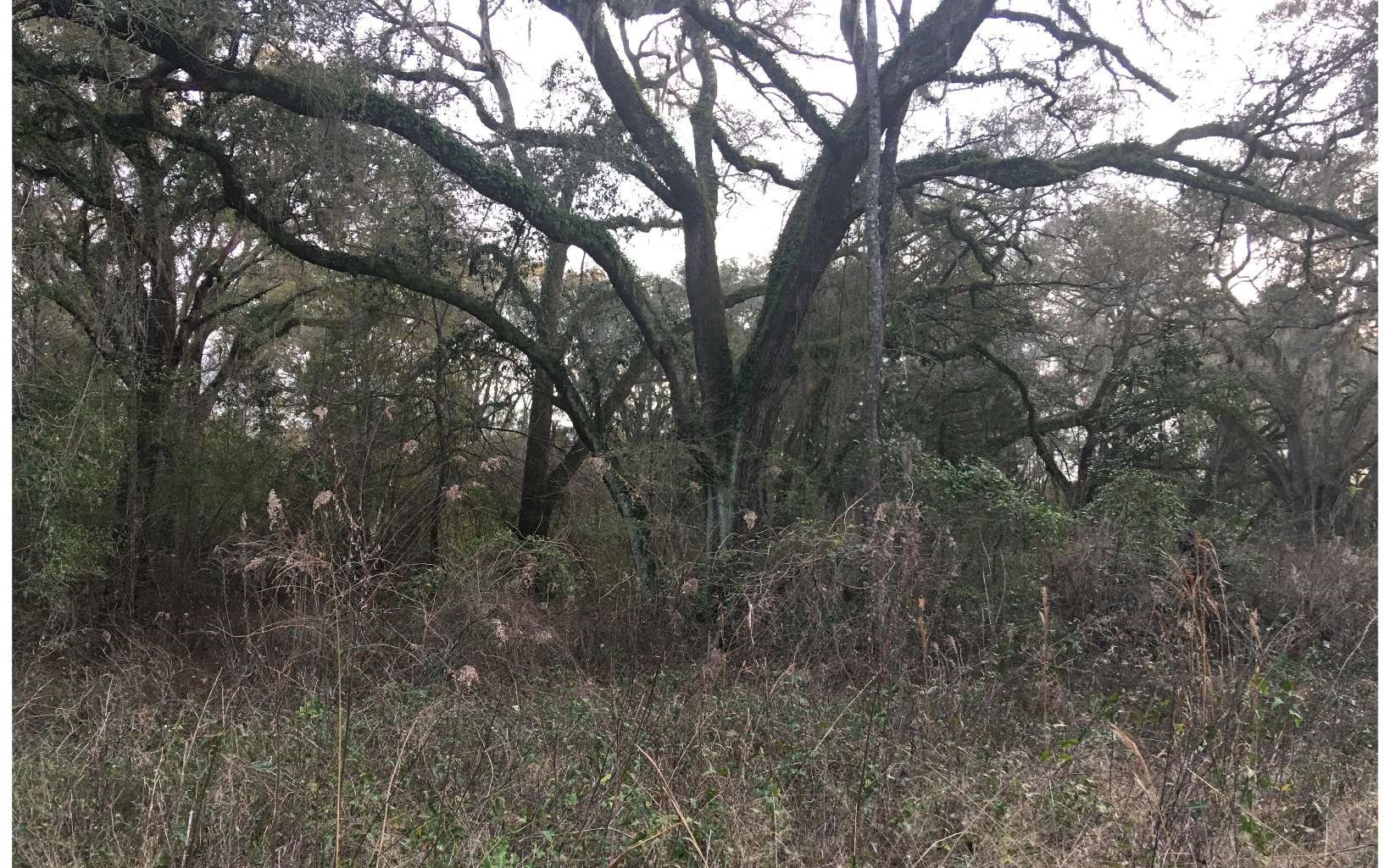 4.43 acres, former home site