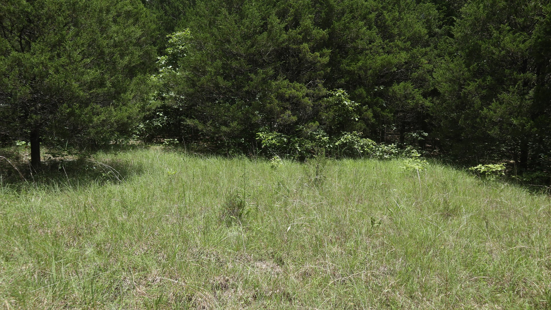 VACANT WOODED LAND FOR SALE IN NORTH ARKANSAS