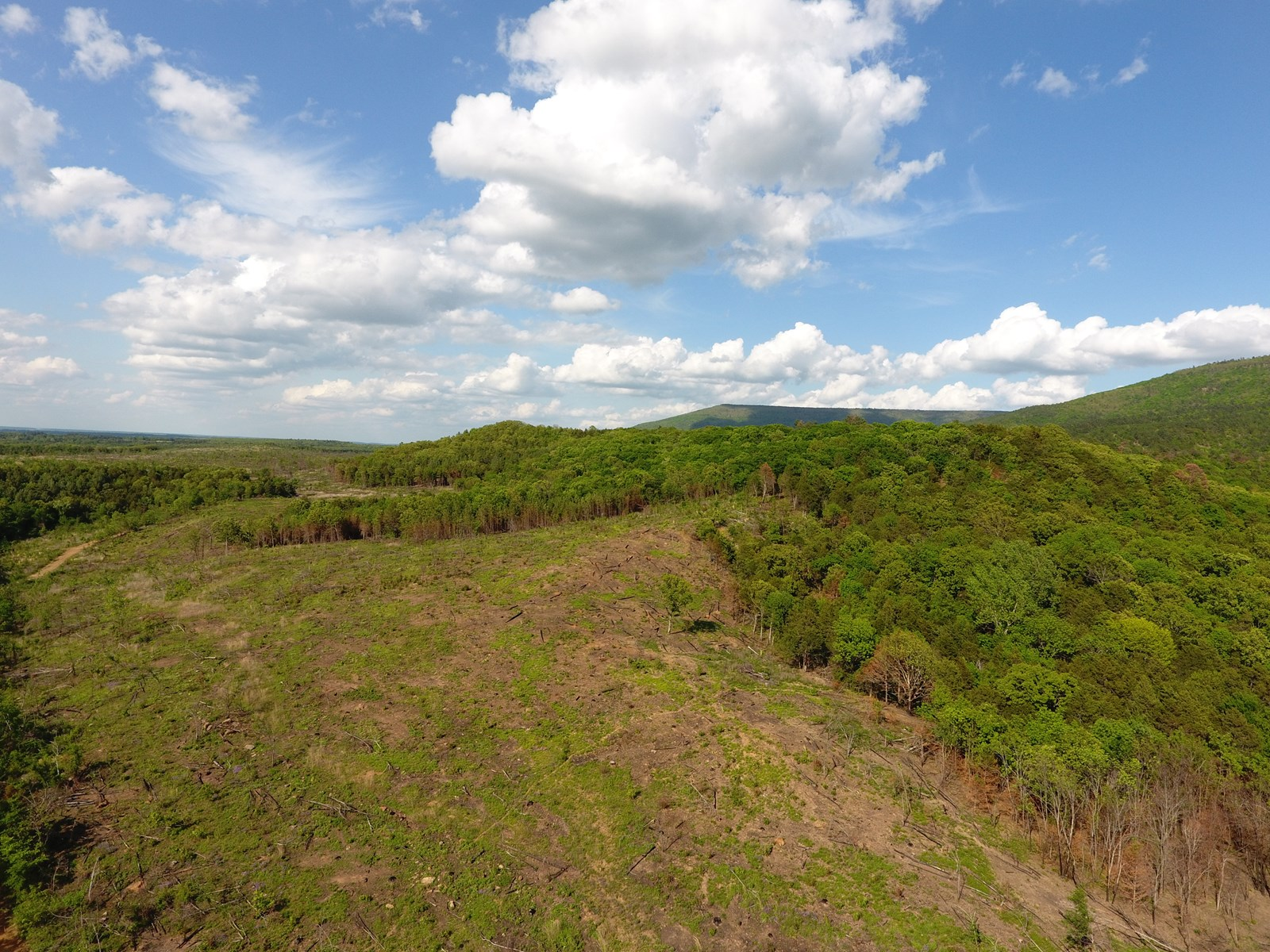 100 Acre Timber Investment and Hunting Property