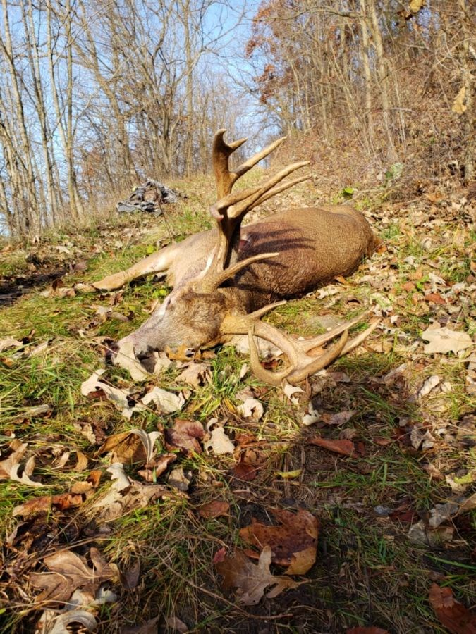 Big Buck Hunting Land for Sale in Boscobel, WI