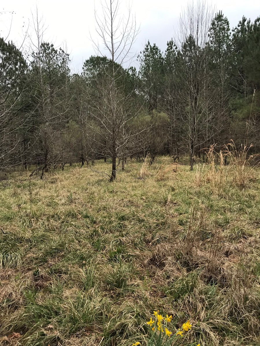 Land for Sale - Silver Ridge Rd, Sturgis, MS - 273 Acres