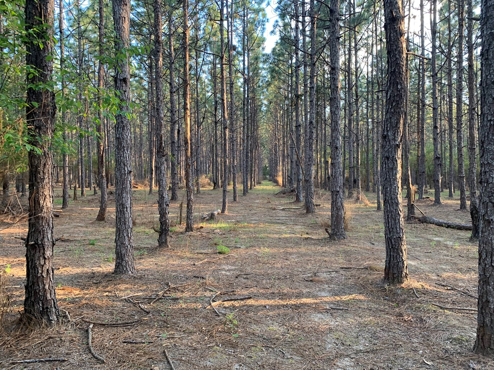 40 Ac Hartford Alabama - Geneva County Land for sale - Pines