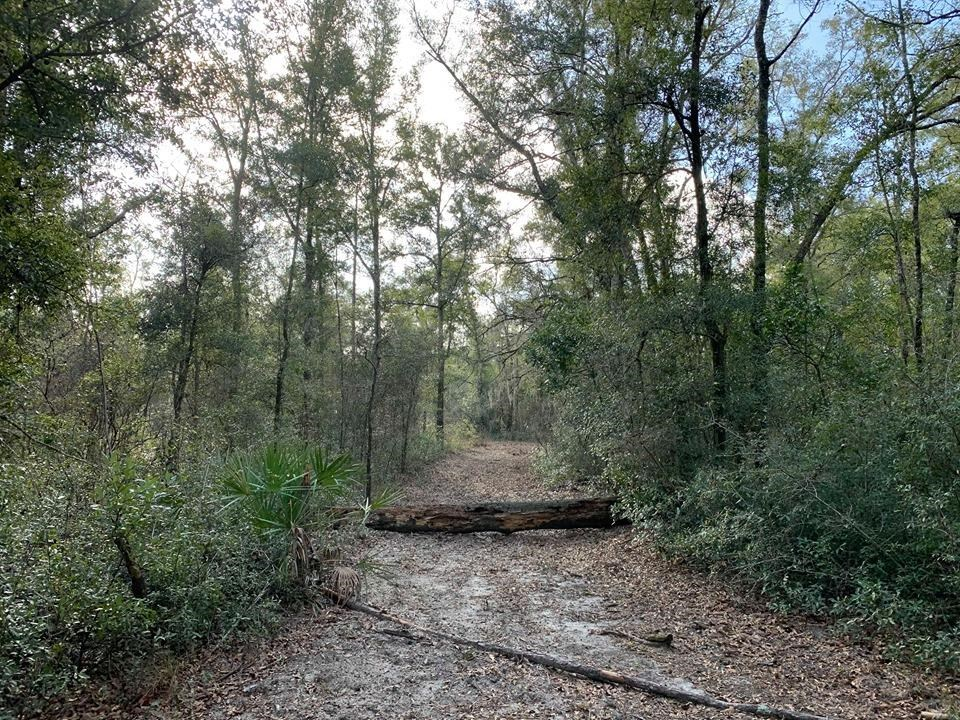 VACANT LAND FOR SALE - BELL FLORIDA GILCHRIST COUNTY