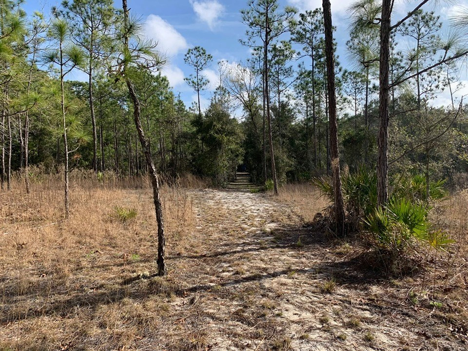 VACANT LAND FOR SALE NORTH CENTRAL FLORIDA - 20 ACRES