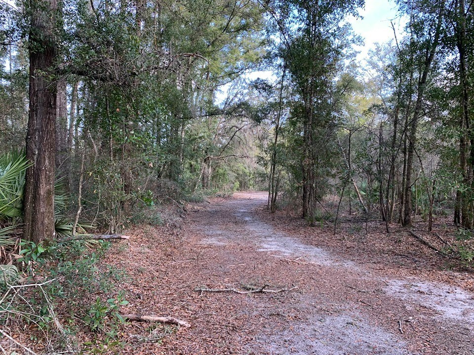 45 ACRES VACANT LAND FOR SALE - NORTH FLORIDA, GILCHRIST CO