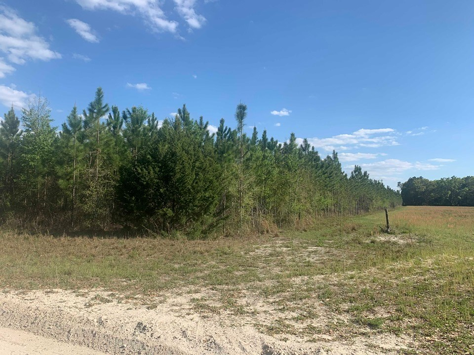 VACANT LAND FOR SALE - 31+ Acres Bell, Gilchrist County, FL