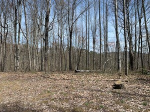 SECLUDED HUNTING LAND-COUNTRY GET-AWAY-HUSTONVILLE, KY.