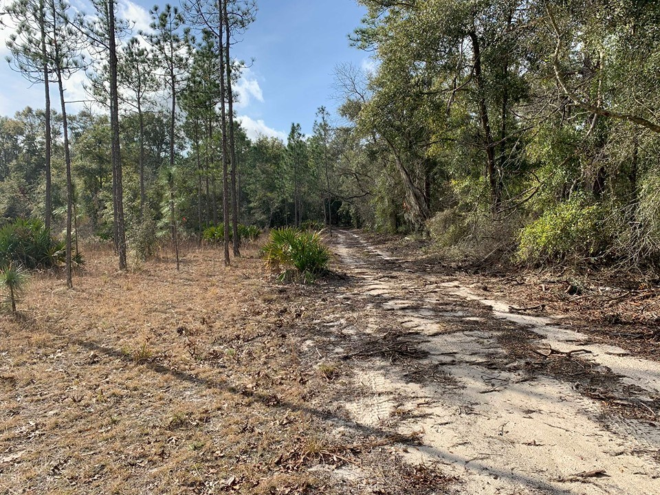 20 ACRE FOR SALE - BRANFORD, GILCHRIST COUNTY, FLORIDA