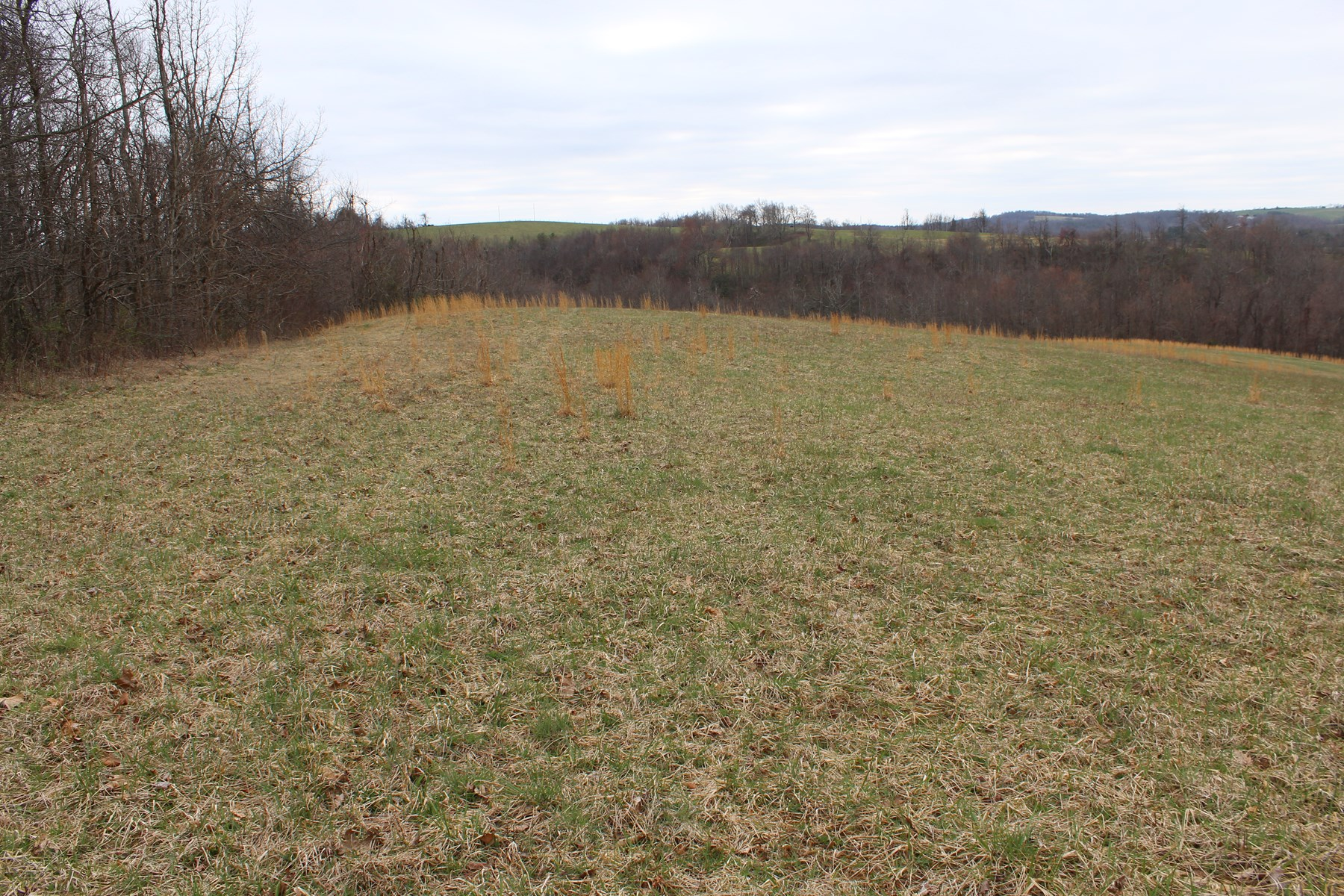 34.2  ACRES LOCATED IN PATRICK COUNTY, VIRGINA