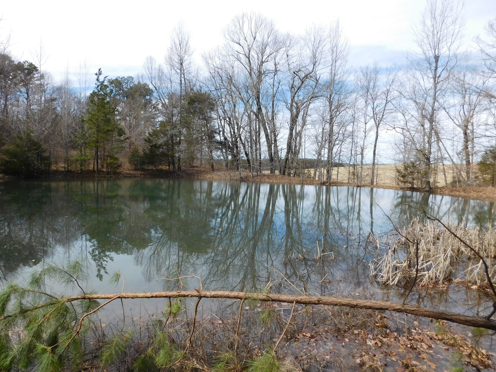 Land and Pond in Mt. Sherman Community