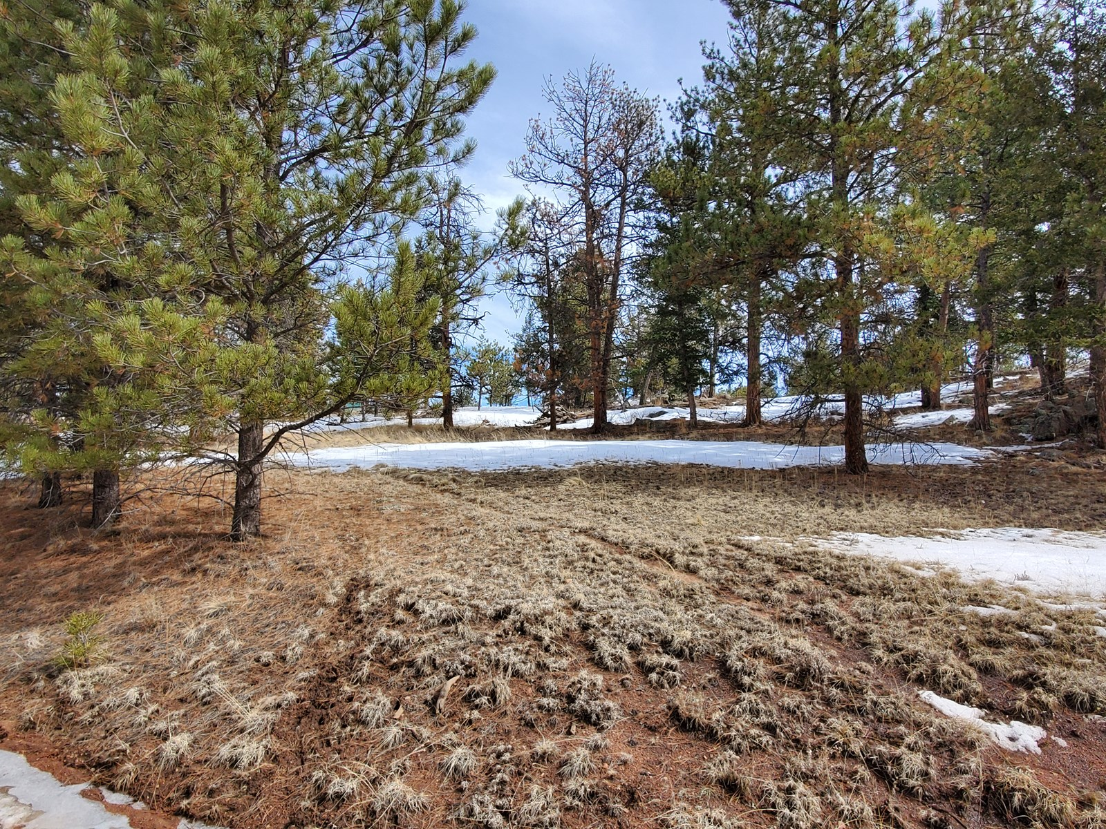 3  Acre Vacant Land Ready for a Home in Florissant, CO