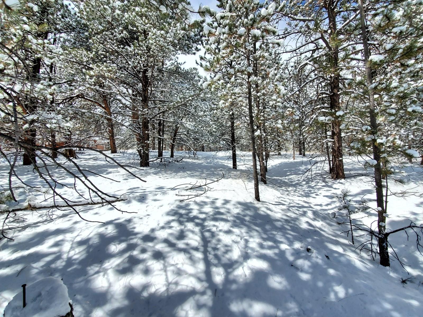 Vacant Land for Sale near Mueller State Park, Florissant, CO