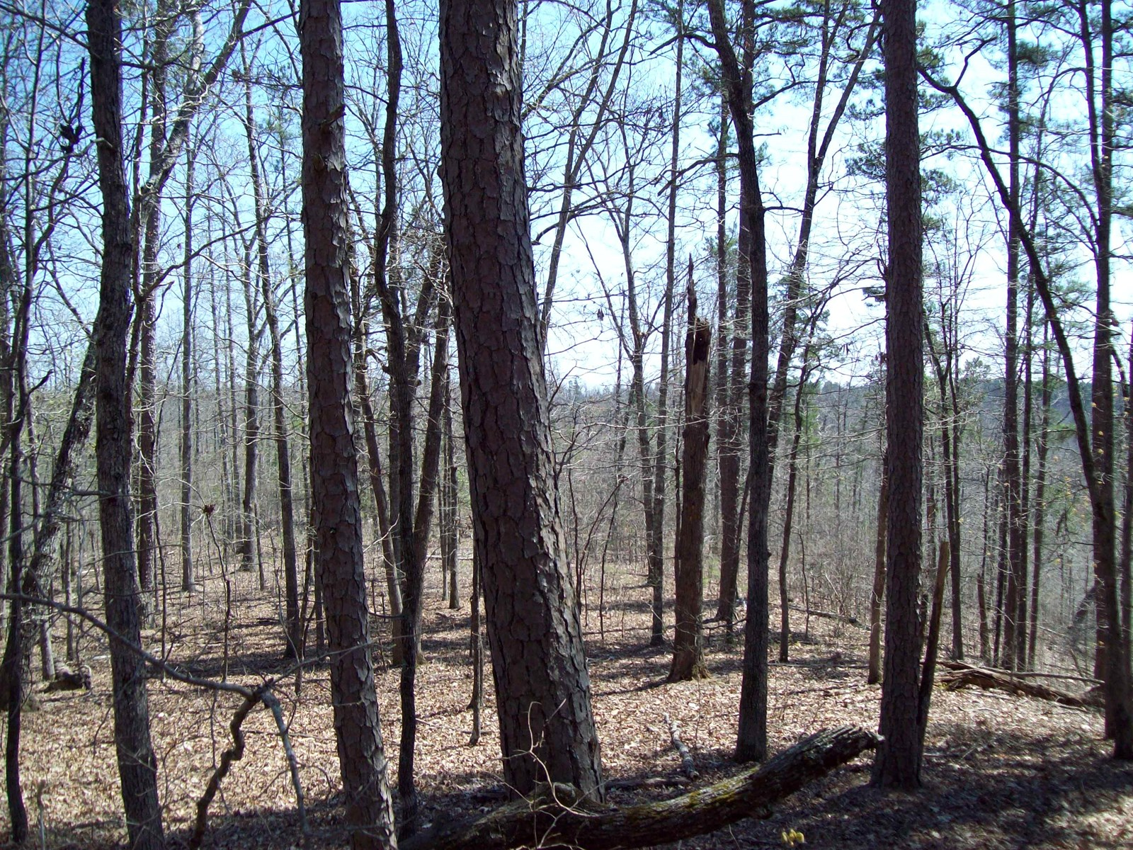 Hunting & Recreational Property in Wayne County
