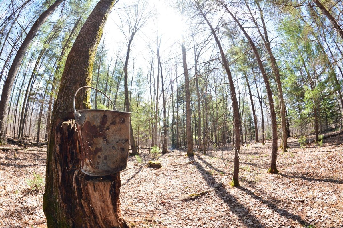 Hunting Land for Sale Juneau County WI