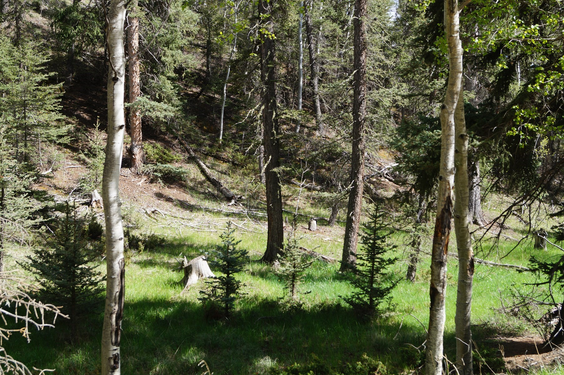 Vacant Land For Sale in Divide, Colorado
