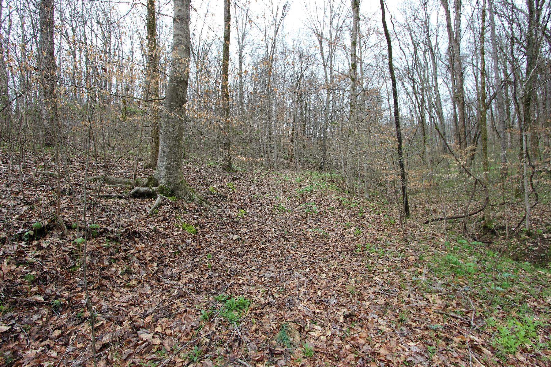 Country Acreage for Sale in Lynnville, Tennessee