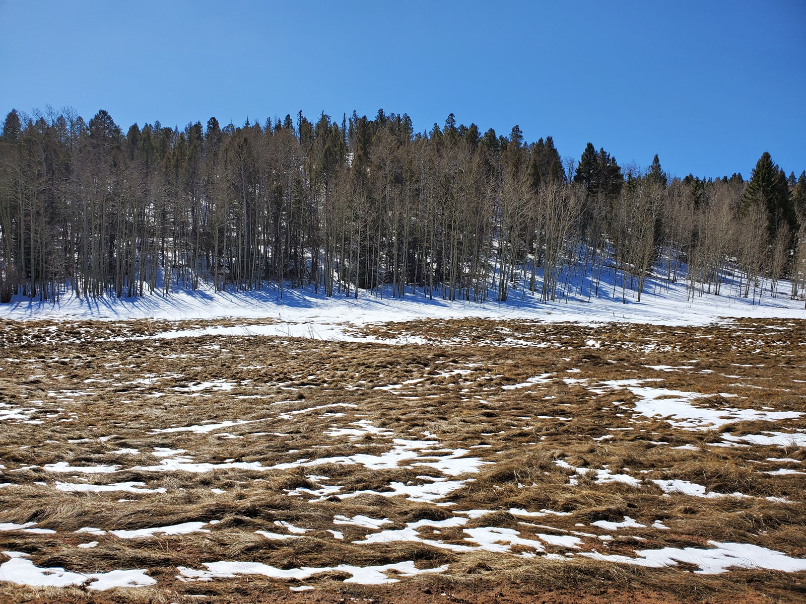 1.31 Acre of Vacant Land with Stream in Florissant, Colorado