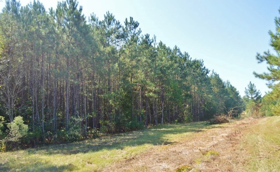 Rural Small Acreage Land for Sale 3.13 Acres, McComb, MS