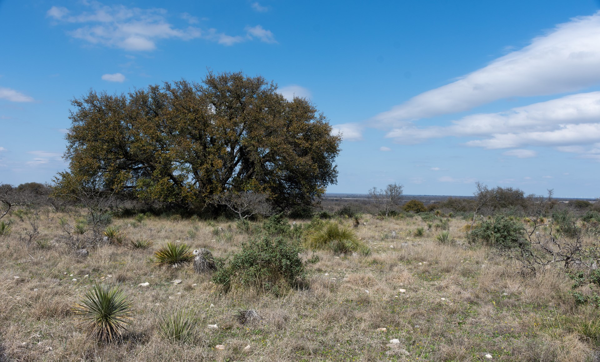 Land for sale Near Eden Texas