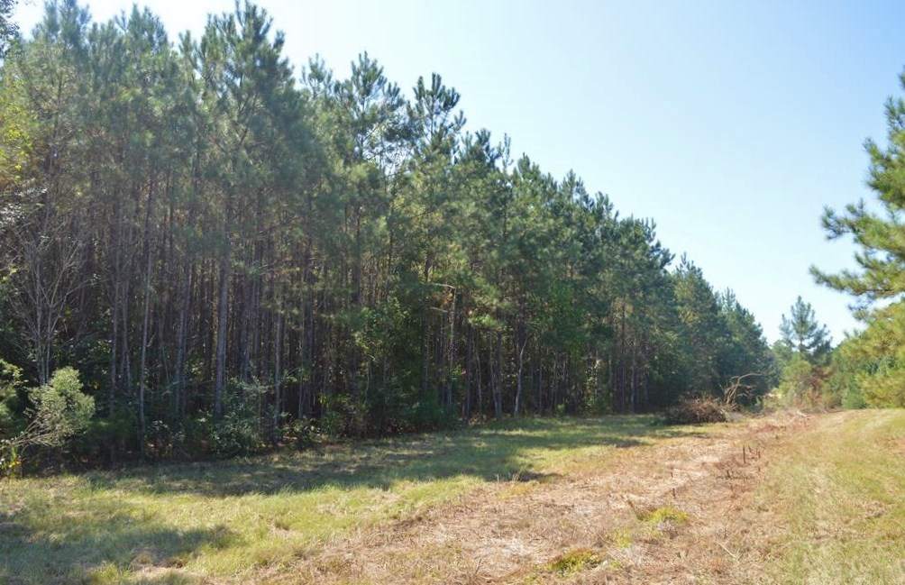 Small Acreage in the Country for Sale 3.05 Acres, McComb, MS