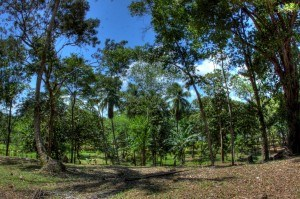 2 acre titled lot on Isla Carenero, Bocas del Toro, Panama