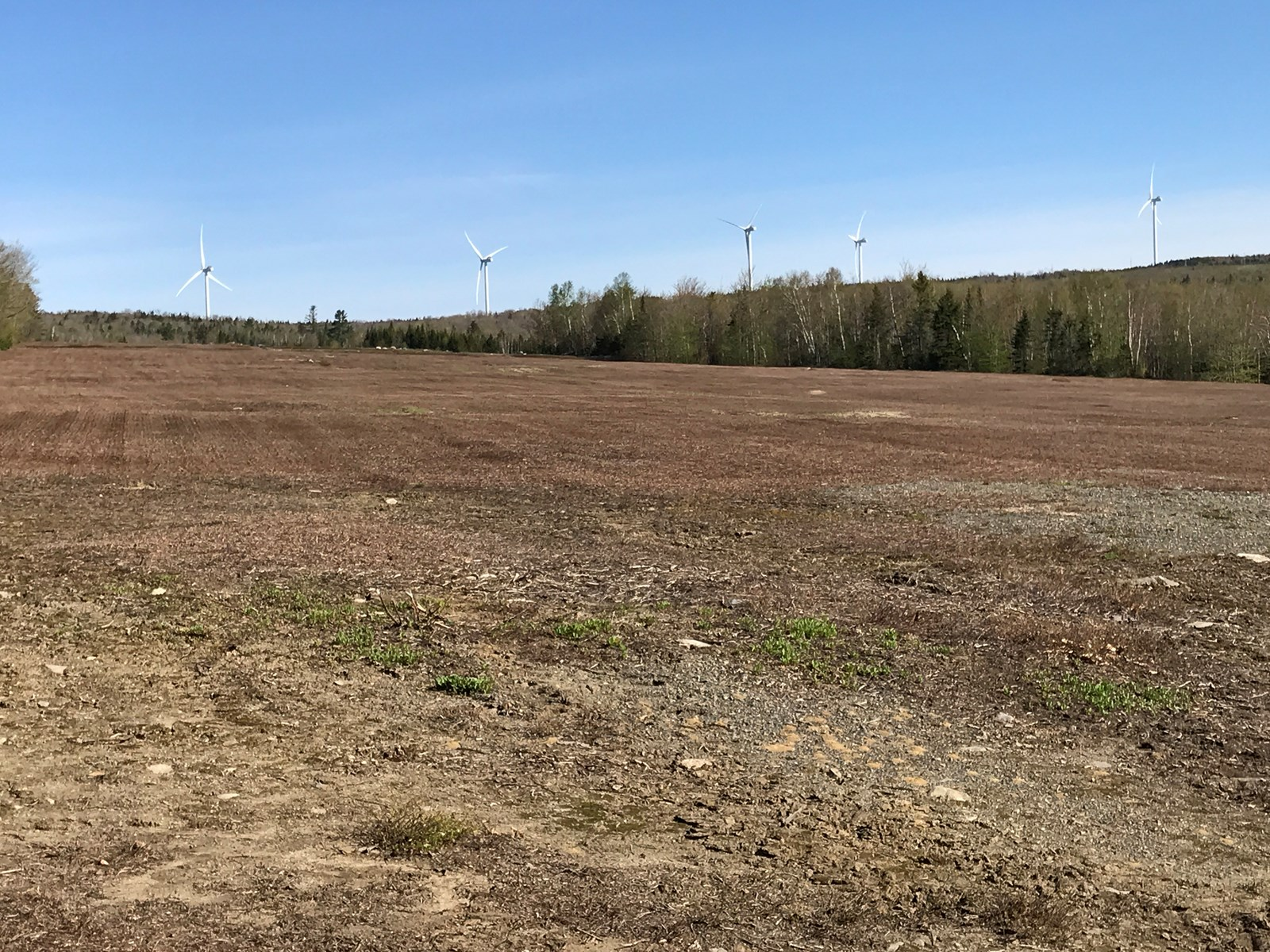 Blueberry Fields For Sale in Maine