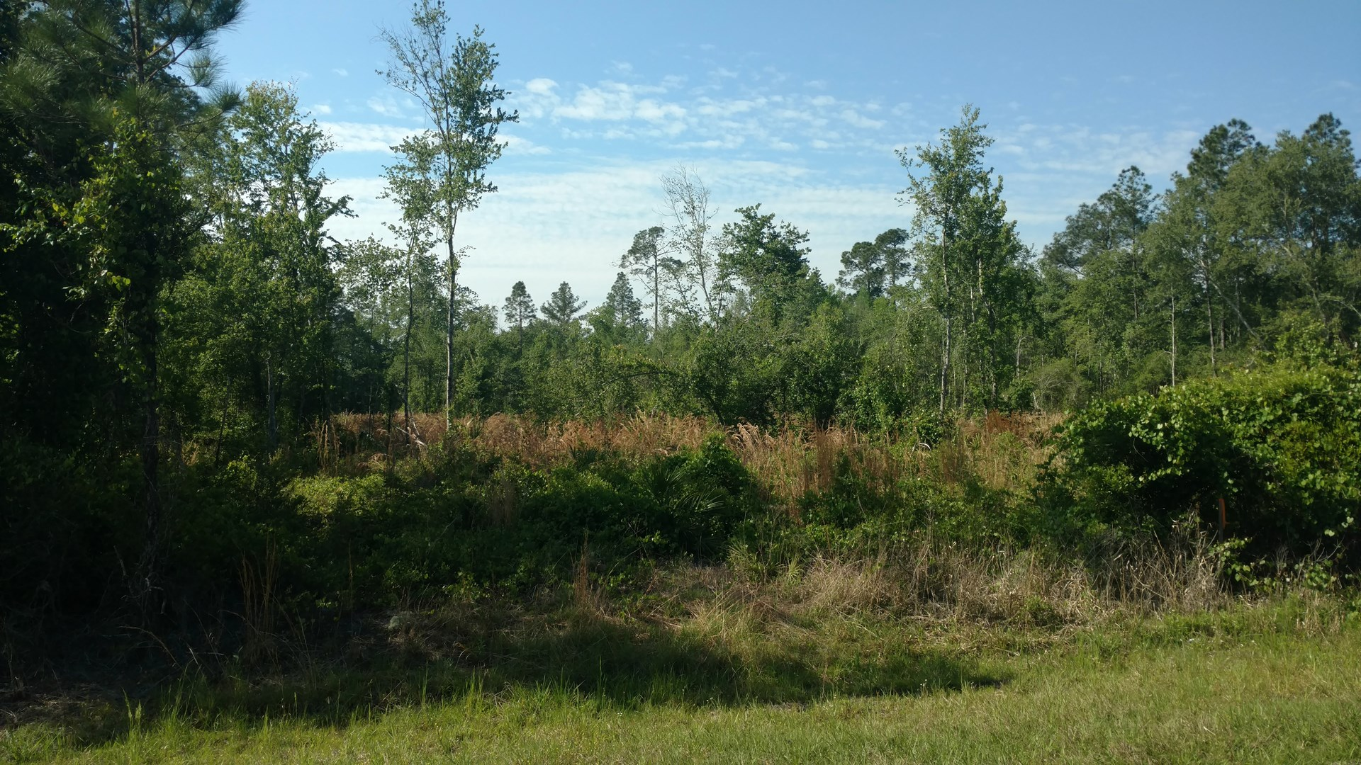 ACREAGE IN NORTH FLORIDA ADJOINING OSCEOLA NATIONAL FOREST