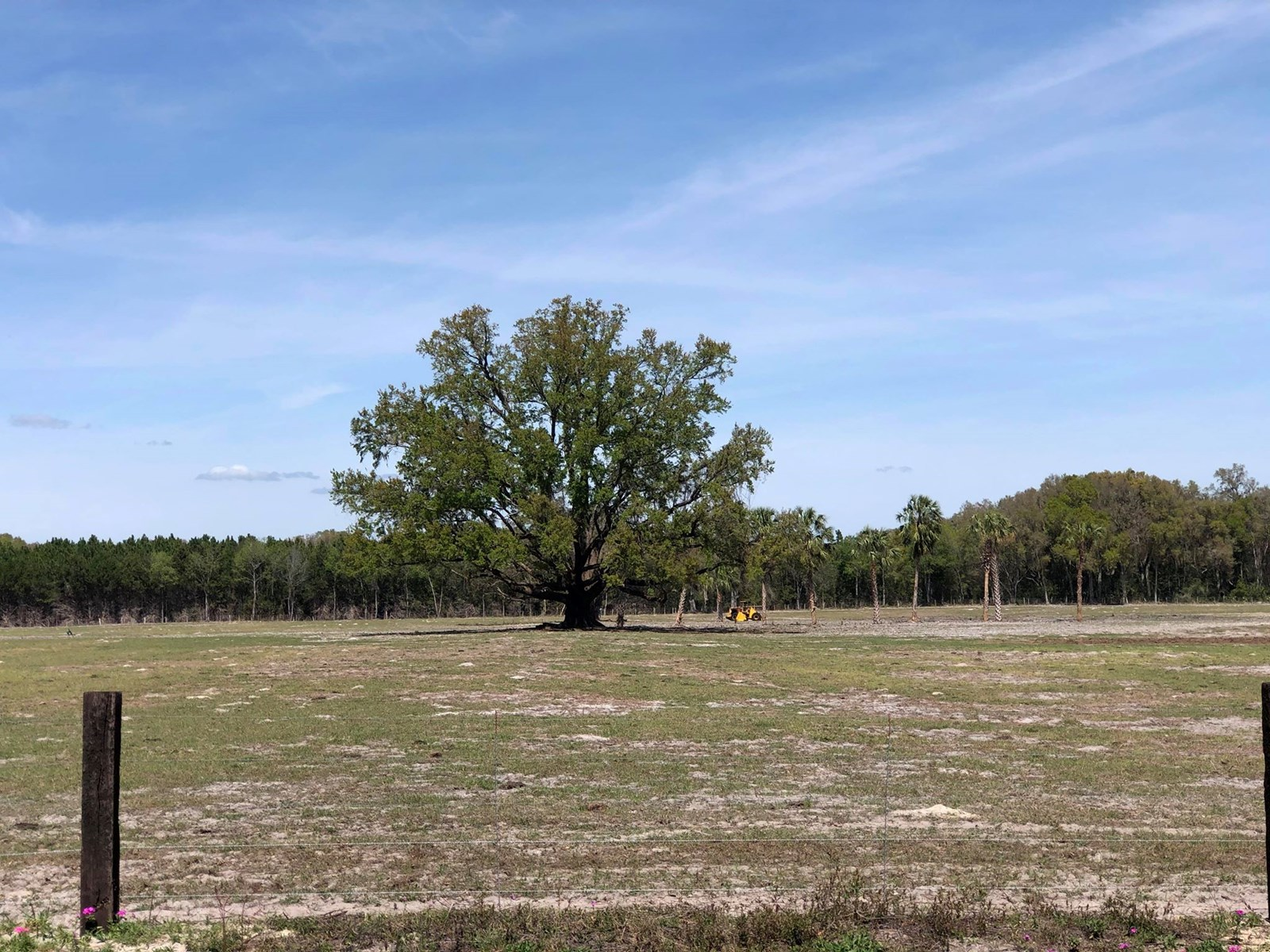 PASTURELAND FOR SALE IN CHIEFLAND, FL - 20 ACRES PAVED ROAD