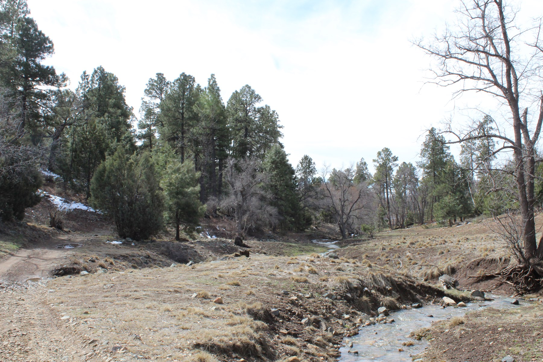 Land with Mineral Rights, Surrounded by Natl Forest, Creek