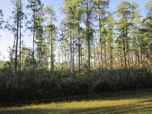 1/2 ACRE LOT FOR SALE, CENTRAL FLORIDA, GROWING NEIGHBORHOOD