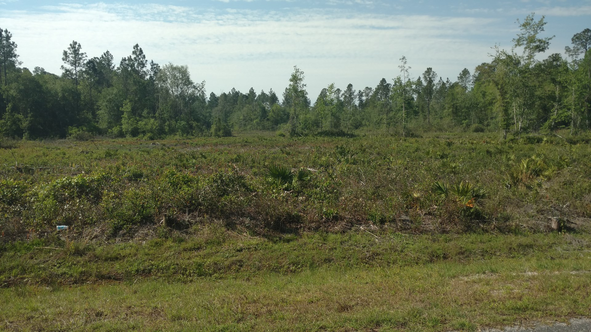 NORTH FLORIDA ACREAGE ADJOINING THE OSCEOLA FOREST