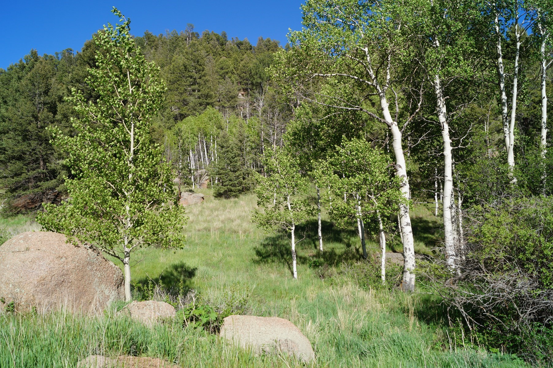 Secluded Vacant Land For Sale in Florissant, CO