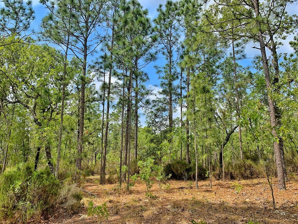 20 ACRES FOR SALE - NORTH CENTRAL FLORIDA - BRONSON, LEVY CO