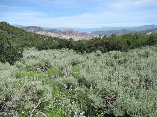 Off Grid Colorado Hunting Land Near Flattops Bordering BLM