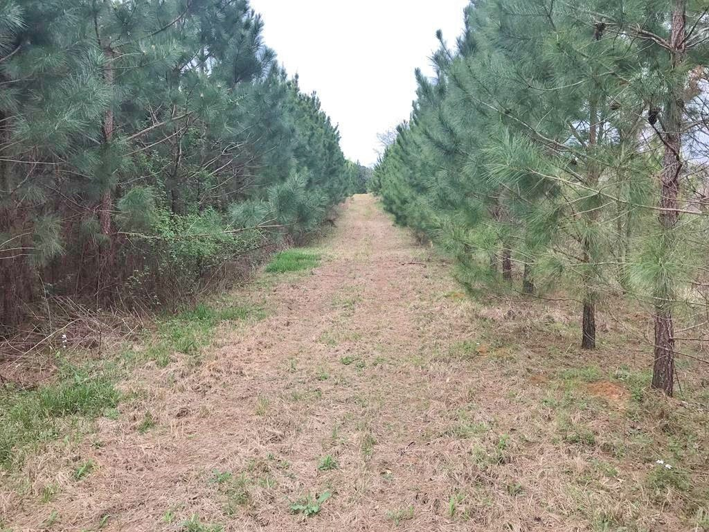 90 Acres Hunting Timber Land for Sale, Smith County, MS