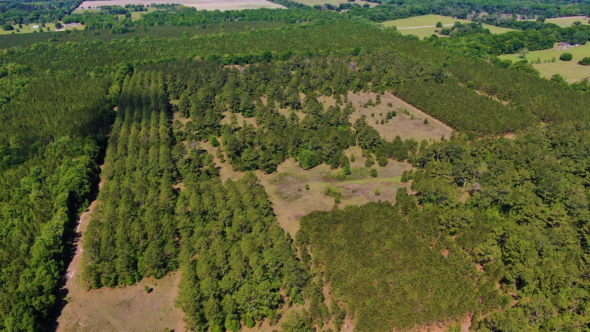 250+ ACRES TIMBERLAND - NORTH CENTRAL FLORIDA, NEWBERRY